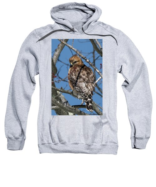 Sweatshirt featuring the photograph Red Shouldered Hawk 2017 by Bill Wakeley