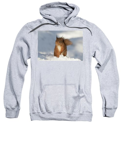 Red Squirrel In The Snow Sweatshirt