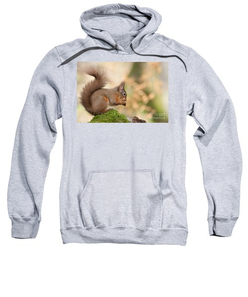 A Moment Of Meditation - Red Squirrel #27 Sweatshirt