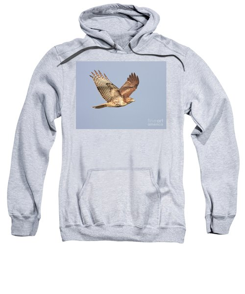 Red Tailed Hawk 20100101-1 Sweatshirt