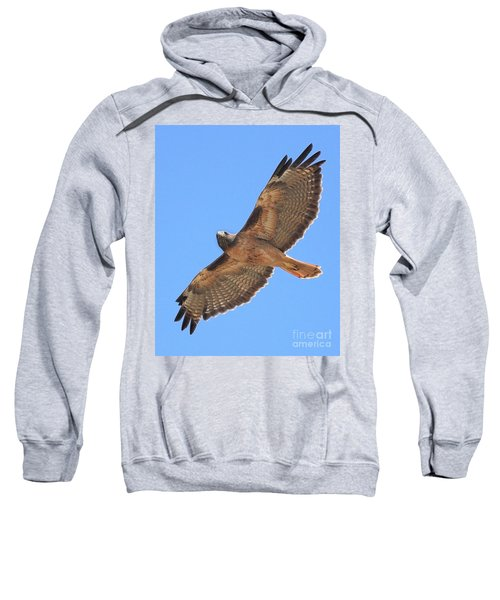 Red Tailed Hawk In Flight Sweatshirt