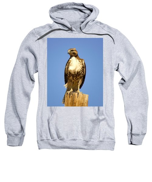 Red-tailed Hawk On Post Sweatshirt