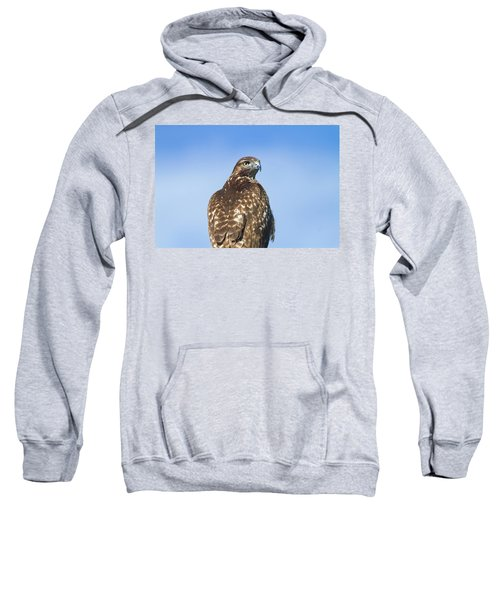 Red-tailed Hawk Perched Looking Back Over Shoulder Sweatshirt