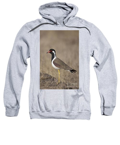 Red-wattled Lapwing Sweatshirt