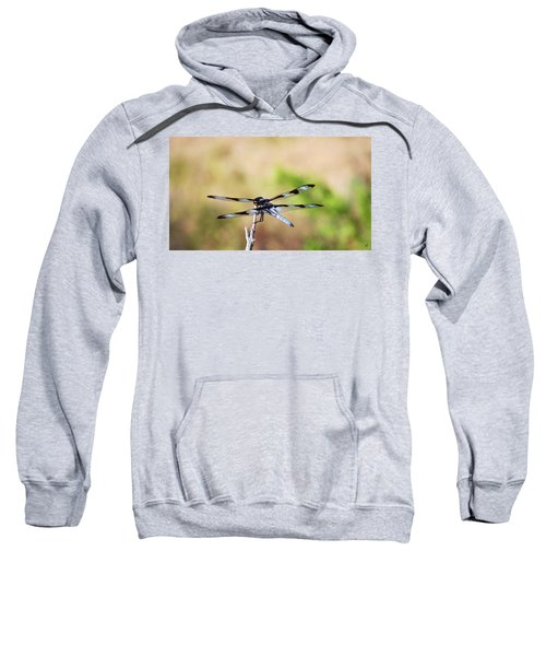 Rest Area, Dragonfly On A Branch Sweatshirt