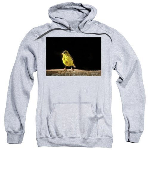 Resting Lesser Goldfinch Sweatshirt
