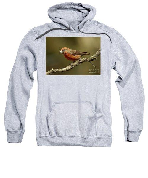 Roaming Crossbills-1 Sweatshirt