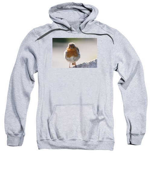 Robin Front Sweatshirt