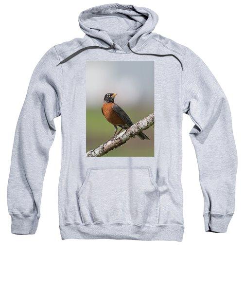Robin Red Breast Sweatshirt