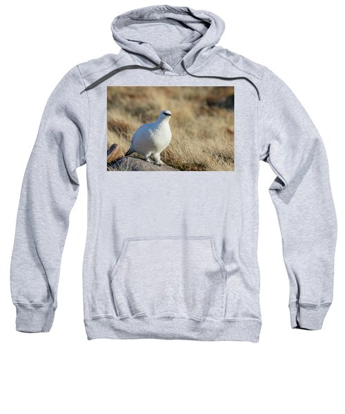 Rock Ptarmigan Sweatshirt