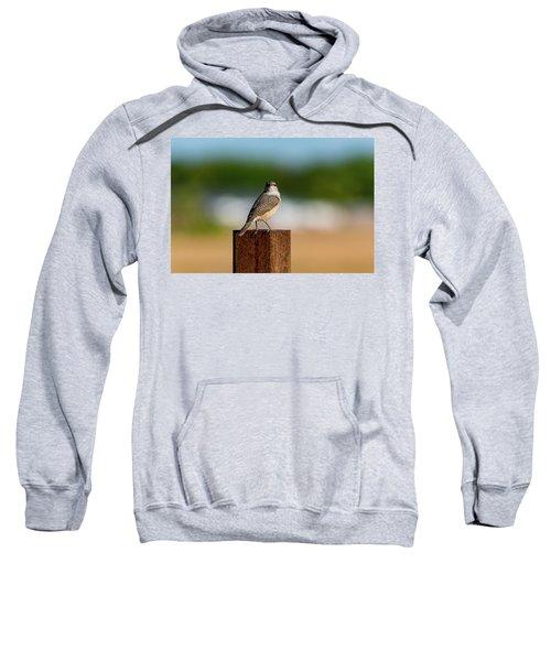 Rock Wren 1 Sweatshirt