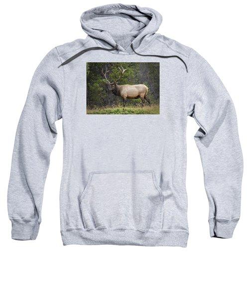 Rocky Mountain National Park Bull Elk Sweatshirt