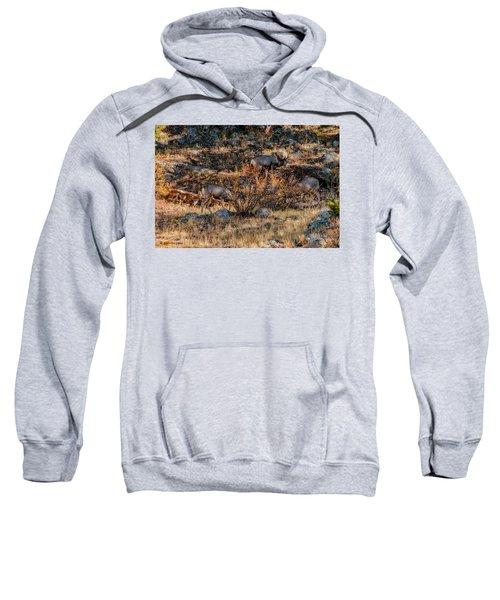 Rocky Mountain National Park Deer Colorado Sweatshirt