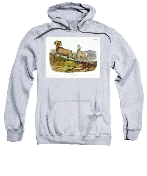 Rocky Mountain Sheep Sweatshirt