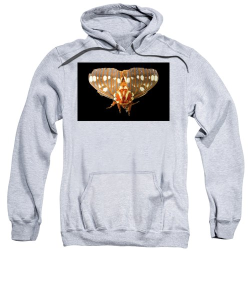 Royal Walnut Moth On Black Sweatshirt