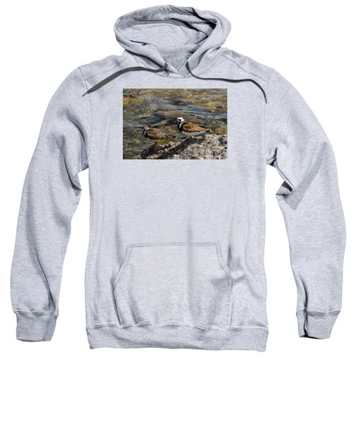 Ruddy Turnstone Sweatshirt