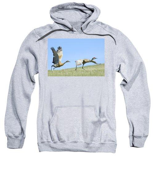Sandhill Cranes Taking Flight Sweatshirt