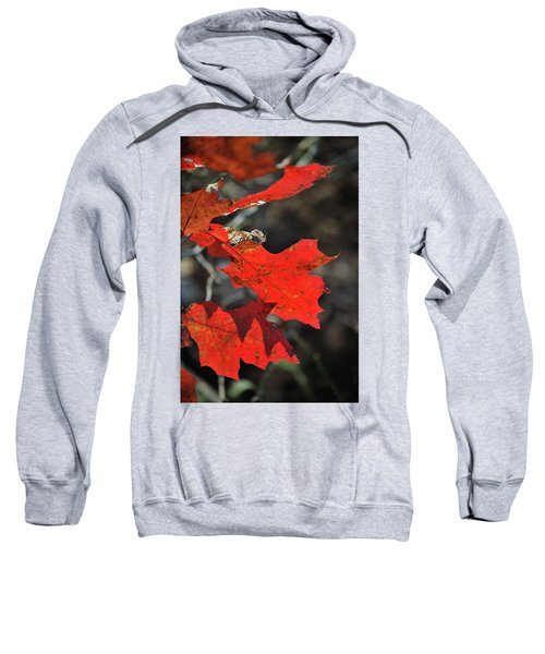 Scarlet Autumn Sweatshirt
