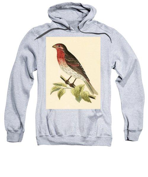 Scarlet Bullfinch Sweatshirt