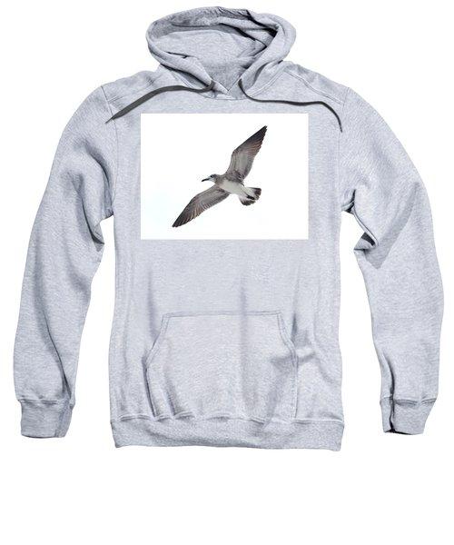 Sea Gull Sweatshirt