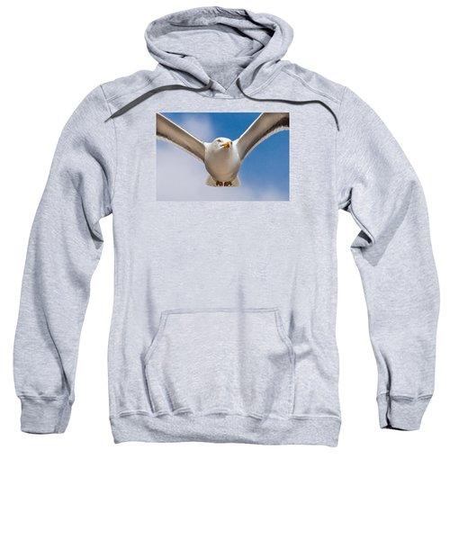 Seabird Closeup Sweatshirt