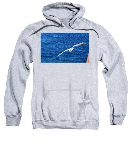 Seagull 1 Sweatshirt