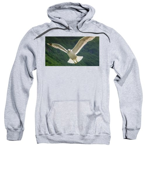 Seagull At The Fjord Sweatshirt