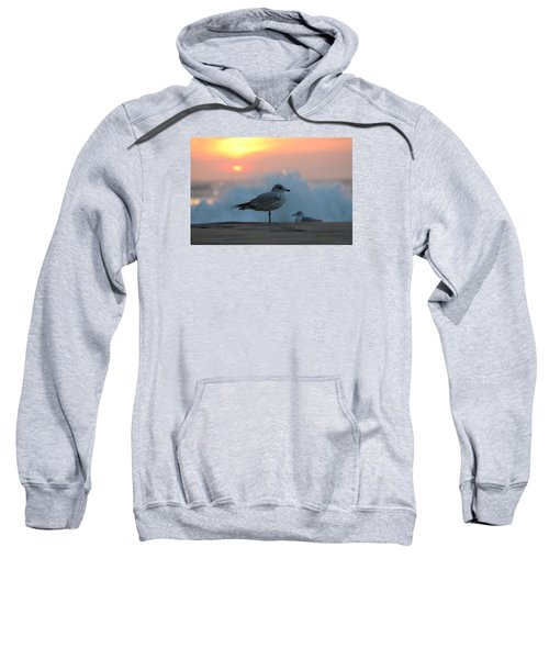 Seagull Seascape Sunrise Sweatshirt