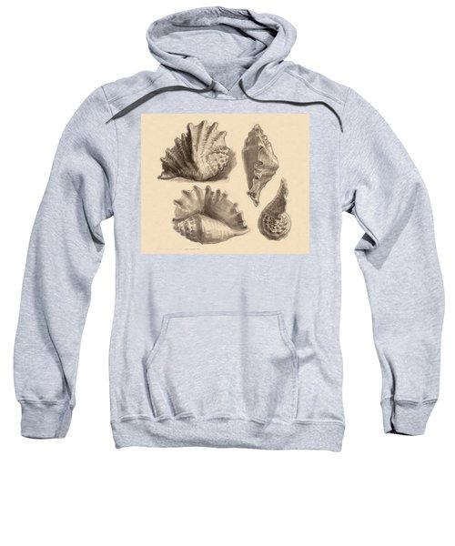 Seba's Spider Conch Sweatshirt
