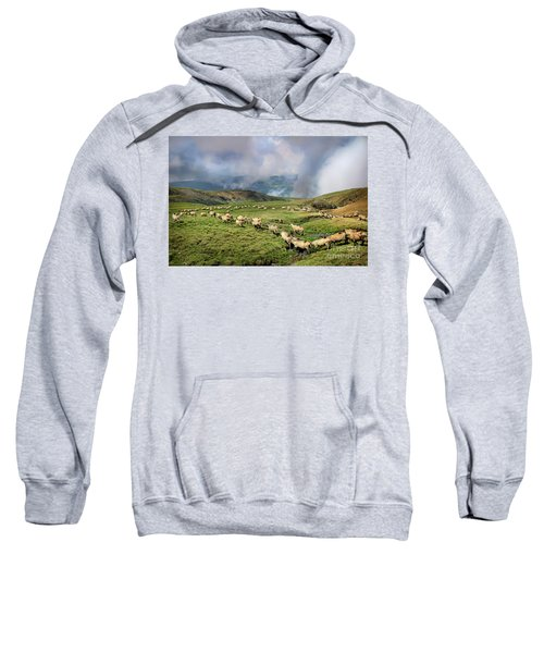 Sheep In Carphatian Mountains Sweatshirt