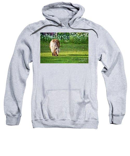 Shetland Pony Sweatshirt