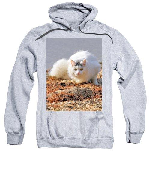 Shore Kitty Sweatshirt