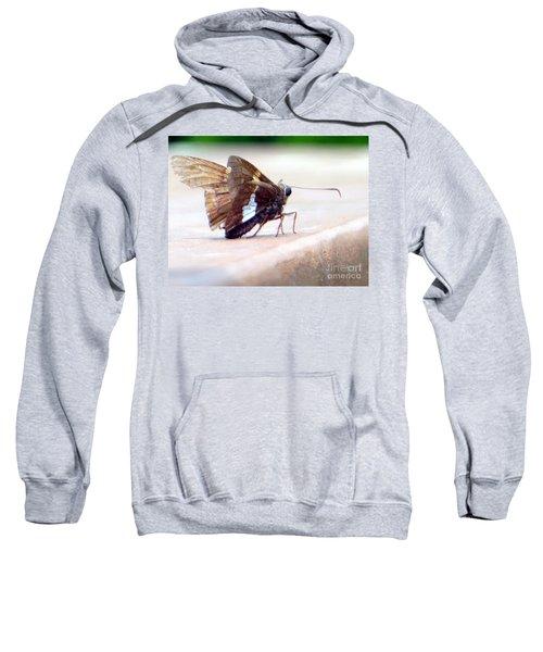 Silver Spotted Skipper Butterfly Sweatshirt