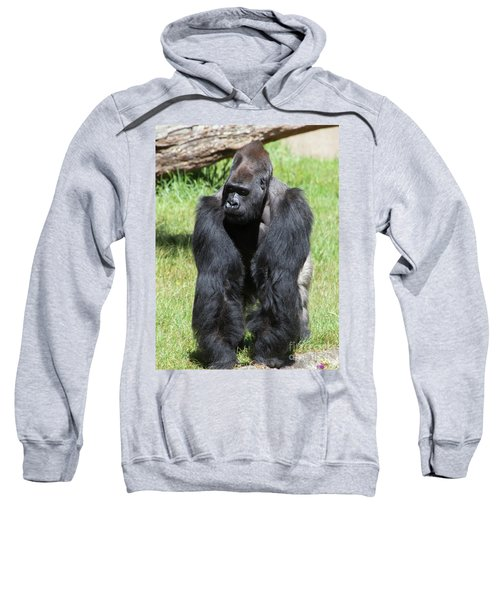 Silverback Gorilla At The San Francisco Zoo San Francisco California 5d3182 Sweatshirt