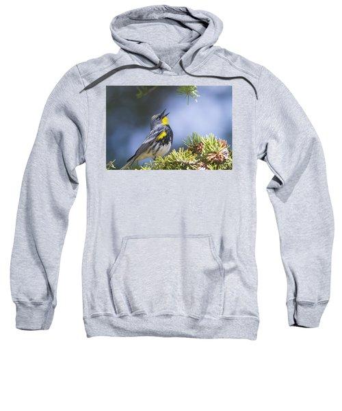 Singing Audubon's Warbler Sweatshirt