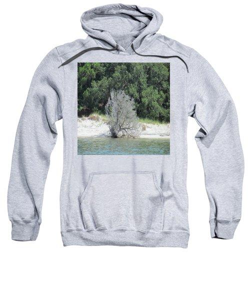 Skeleton Tree On The Beach Sweatshirt