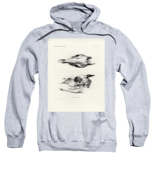 Sweatshirt featuring the drawing Skull Of A Bush Duiker, Sylvicapra Grimmia by J D L Franz Wagner