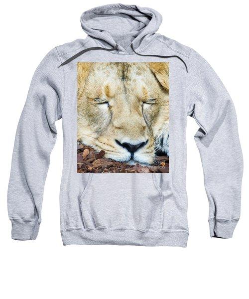 Sleeping Lion Sweatshirt