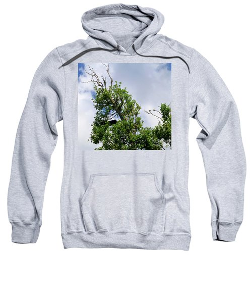 Sweatshirt featuring the photograph Sleeping Monkey 2 by Francesca Mackenney