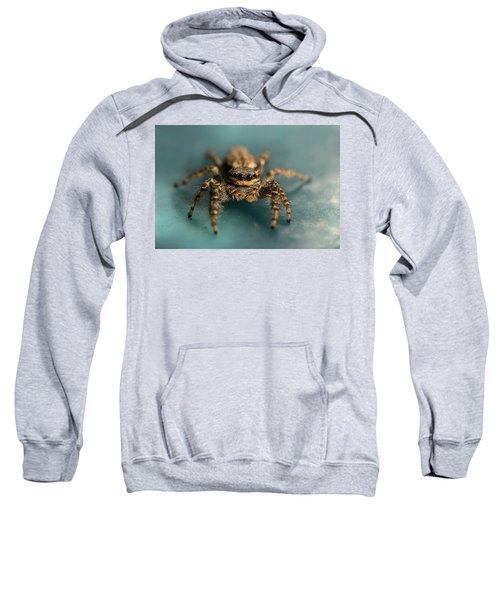 Small Jumping Spider Sweatshirt