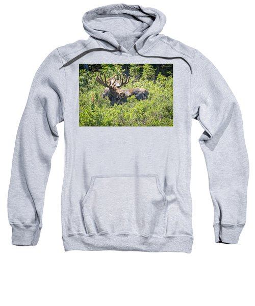 Smiling Bull Moose Sweatshirt