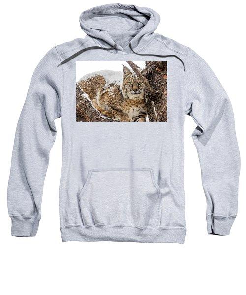 Snowy Bobcat Sweatshirt