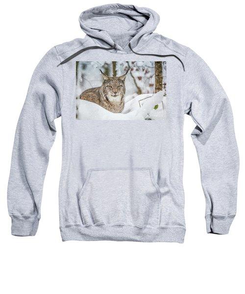 Snowy Lynx Sweatshirt