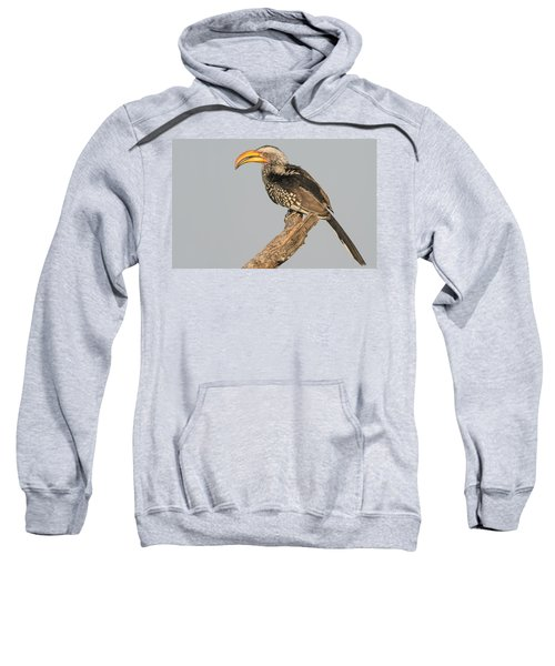 Southern Yellow-billed Hornbill Tockus Sweatshirt
