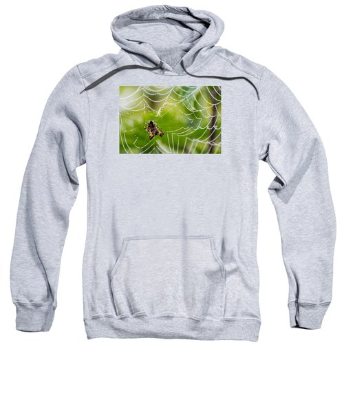 Spider And Spider Web With Dew Drops 05 Sweatshirt