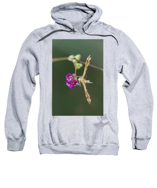 Spiderling Plume Moth On Wineflower Sweatshirt