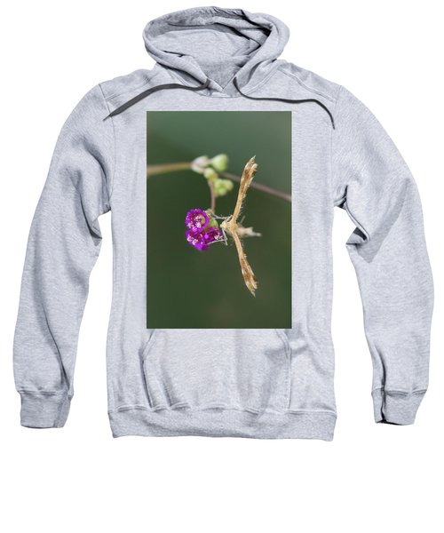 Spiderling Plume Moth On Wineflower Sweatshirt