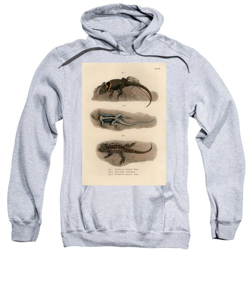 Sweatshirt featuring the drawing Spiny Lizards, Sceloporus by Carl Wilhelm Pohlke
