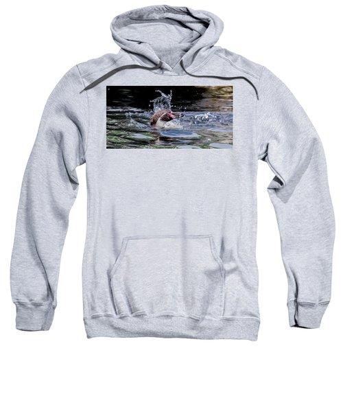 Splashing Humboldt Penguin Sweatshirt