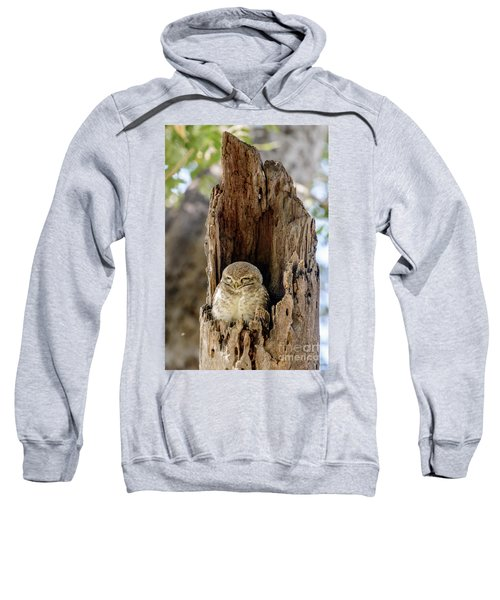 Spotted Owlet Sweatshirt